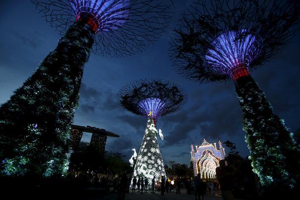 في حديقة في خليج سنغافورة، اقيمت هذه الاشجار الكبيرة.*