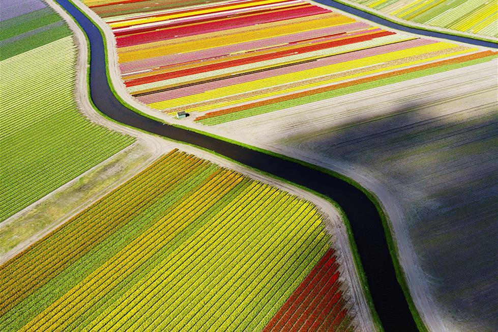 حقول زهرة التوليب فى هولندا ـ تصوير اندرس اندرسون