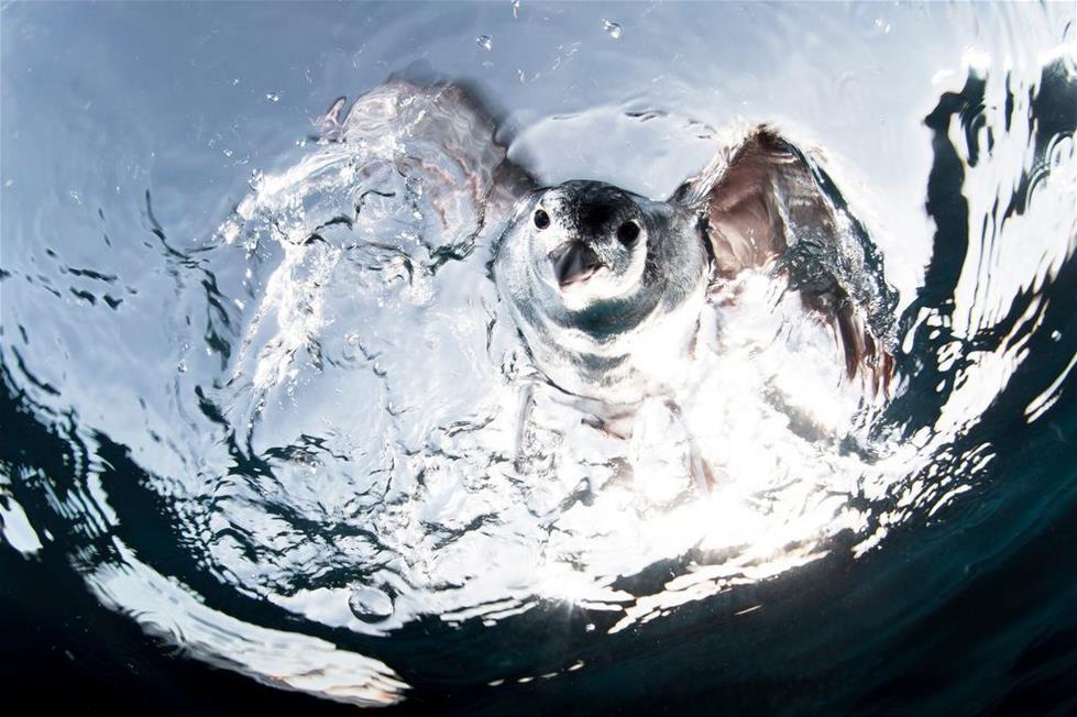 طائر يبحث عن سمك السردين قى المكسيك ـ تصوير اليخاندرو بريبتو