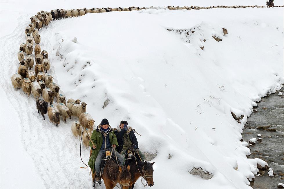 رعاة فى مرتفعات الصين ـ تصوير رويترو
