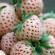 بالصور الأنانيز فاكهة جديدة لذيذة الطعم تغزو الأسواق العربية قريباً