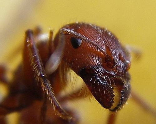 وعى الحشرات 1