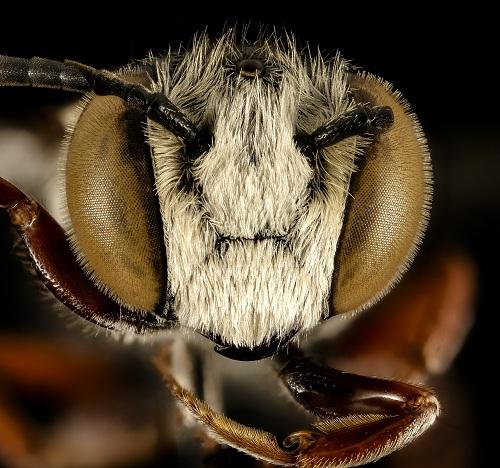 وعى الحشرات 2