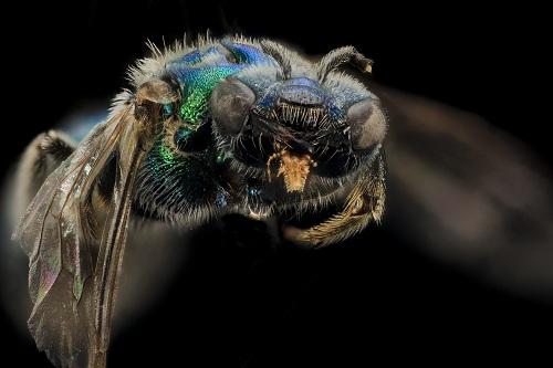 وعى الحشرات 3