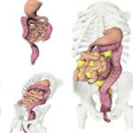 المساريق احدث جهاز يكتشف في جسم الإنسان  (صور)