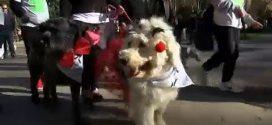مسيرة للكلاب في إسبانيا للحث على تبني الحيوانات