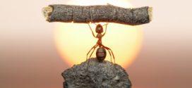 حقائق غريبة قد لا تعرفها عن عالم النمل
