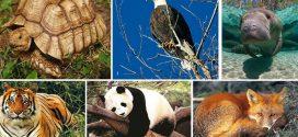 مليون فصيلة من الحيوانات معرضة للانقراض